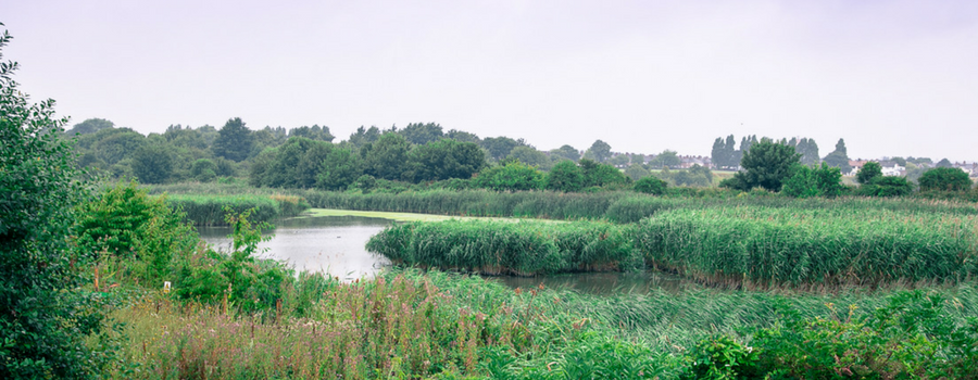 Port Sunlight River Park – a haven for humans and wildlife not far from Heswall