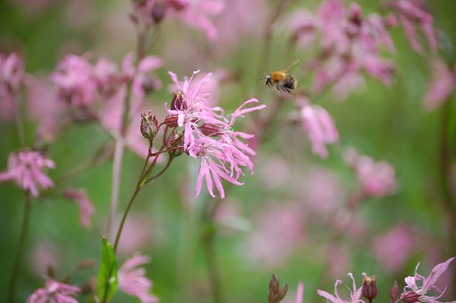 Wildlife garden (Photo c Buglife)